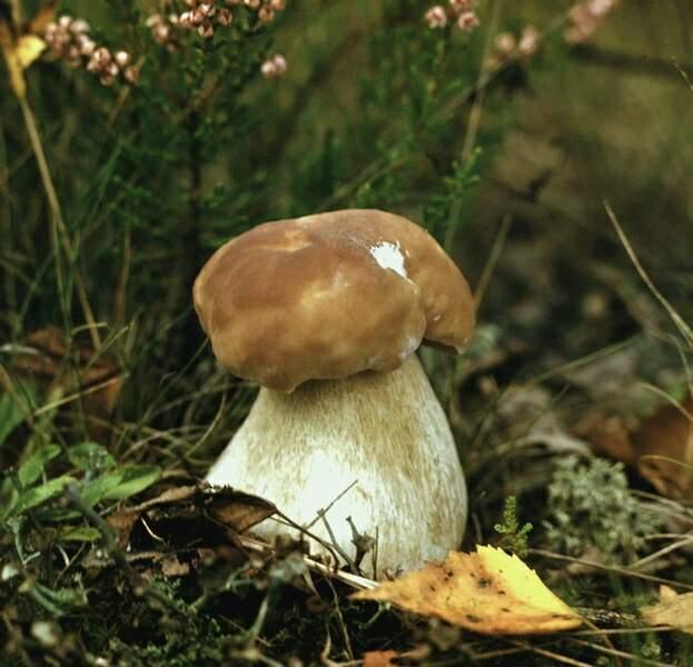 Окружающий мир удивительные грибы