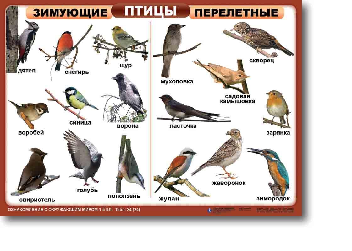того, снимает птицы донбасса фото с названиями и описанием диван бруклин элегантный